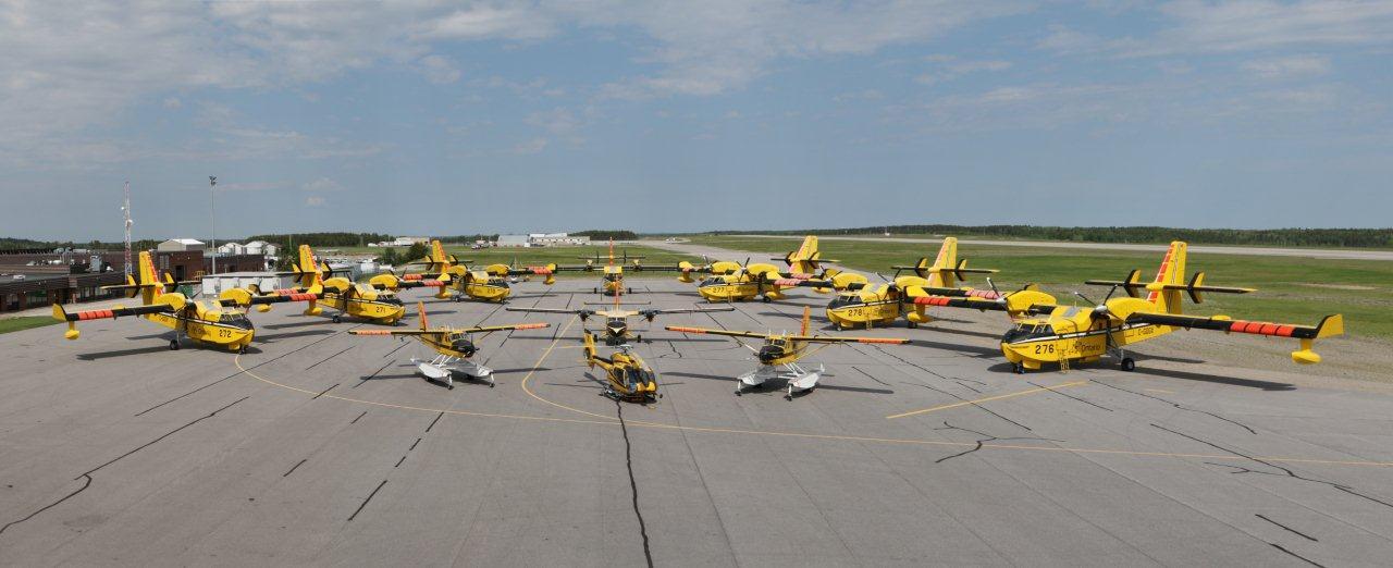 nwr-yellow-birds-1
